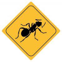 Aufkleber Sticker Achtung Ameise Autoaufkleber