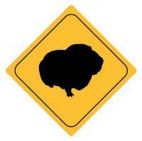 Aufkleber Sticker Achtung Meerschweinchen Autoaufkleber