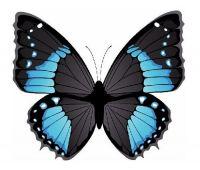 Aufkleber Sticker Schmetterling blau