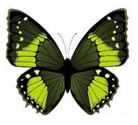 Aufkleber Sticker Schmetterling grün